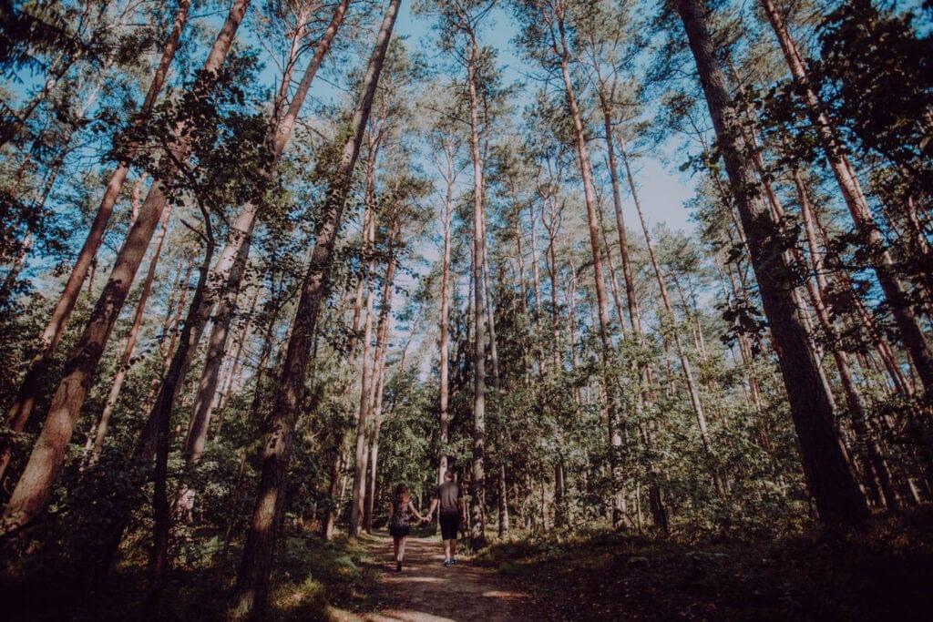 Drzewa na ścieżce edukacyjnej w Bobrówce